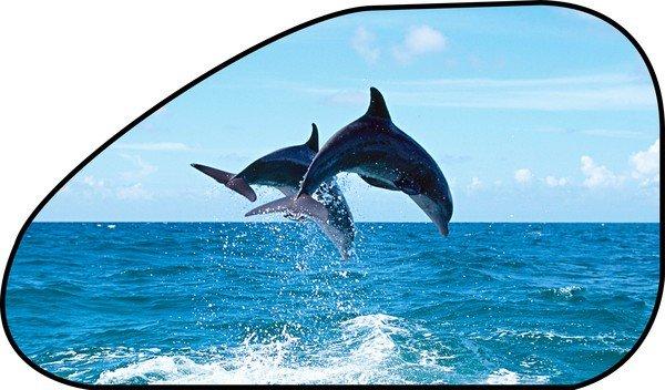 Sonnenschutz Seitenfenster selbsthaftend 65 x 38 cm - Motiv Delfin