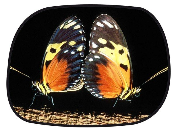 sun protection side window self-adhesive 45 x 34 cm - motif butterfly